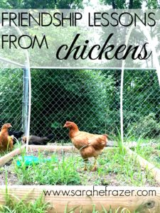 Friendship Lessons from Chickens