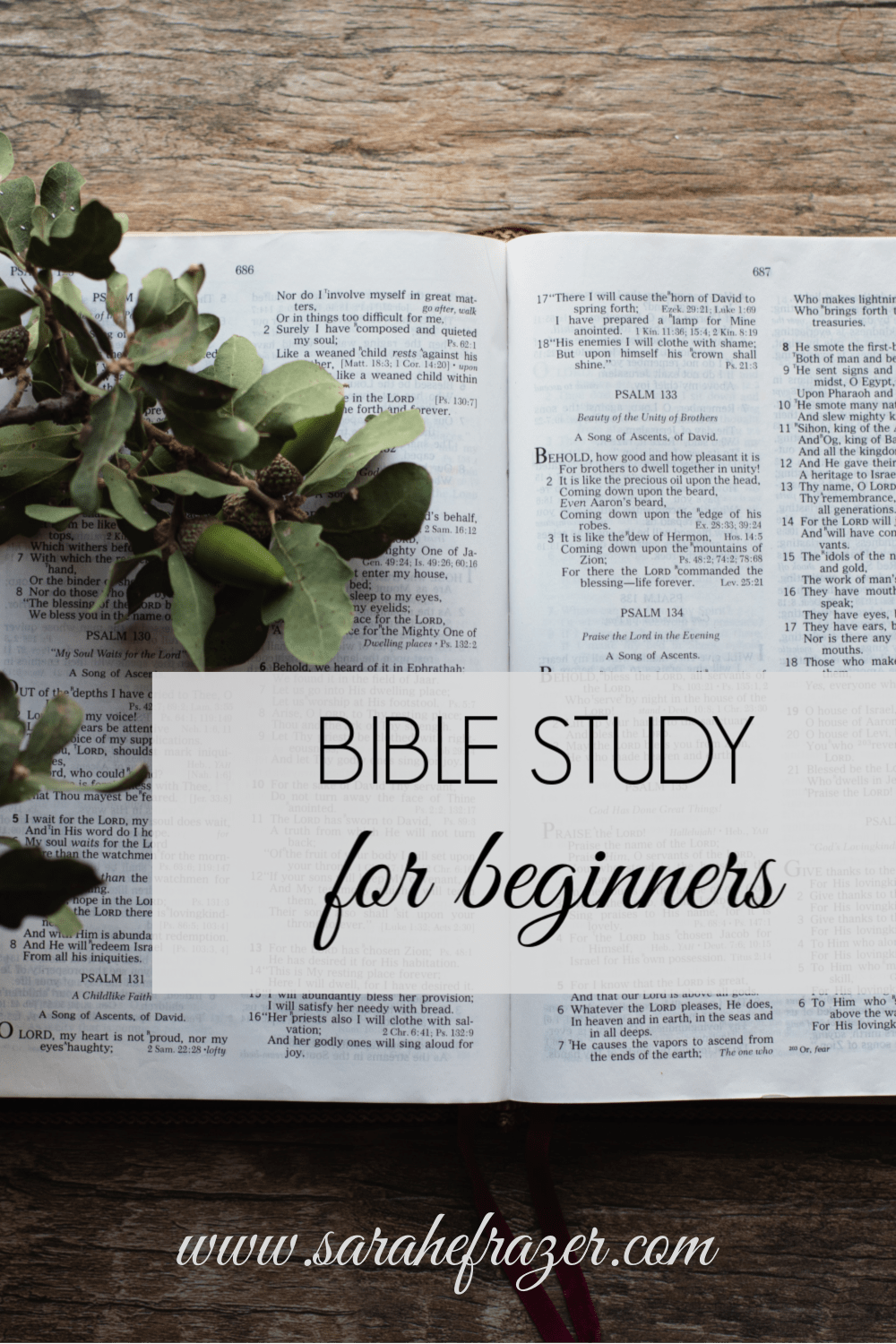 How to Study the Bible for Beginners – Choosing Where to Read